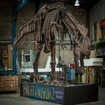 Night at the Museum T-Rex dinosaur skeleton for hire